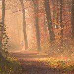 Comment rester motivé en automne ?